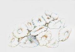 Fingerkoralle-Caulastrea-frucata-04052004.jpg
